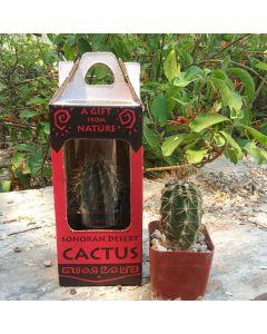 Plant Saguaro Boxed