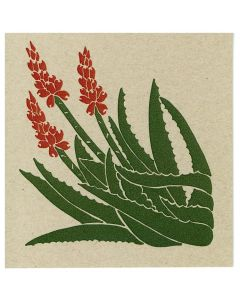 Jim Sudal Blooming Aloe Cards